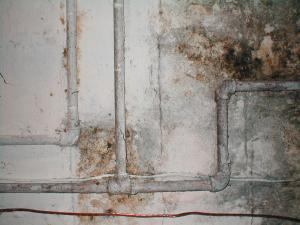 Our Plumbers in Cupertino CA Can Help Prevent Moldy Drywall Due to Pipe Leaks